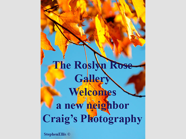 The Rosyln Rose Gallery Welcomes Craig's Photography